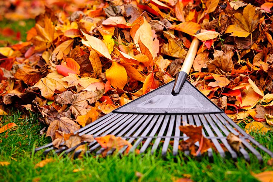 Fall Cleanup Marketing